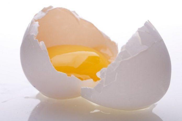 Salmonella belirtileri ve korunma yolları nelerdir?
