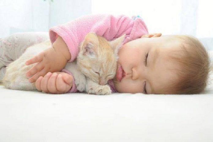 Evcil hayvan beslemek çocuğunuzun alerji riskini azaltabilir
