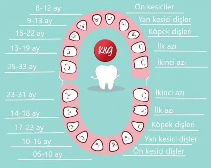 Diş çıkarma geç veya erken başlayabilir!