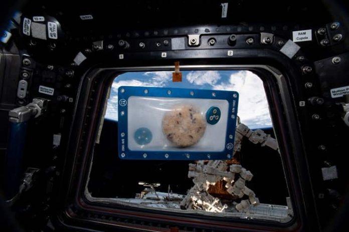 Uzayda kurabiye mi pişer demeyin!Bu da oldu
