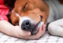 Çocuğunuza evcil hayvanının ölümünü nasıl anlatabilirsiniz?